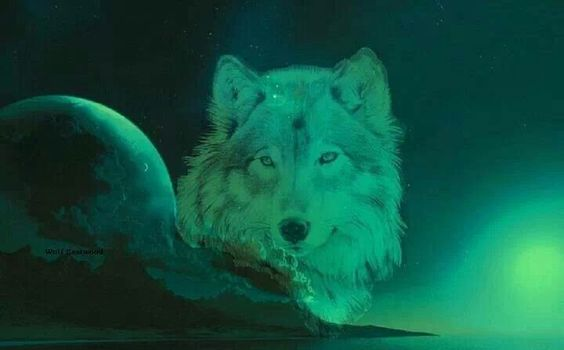 Green Wolf Beautiful Wolves Baby Animals Cute Animals