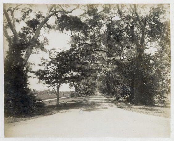 botanical gardens circa 1900