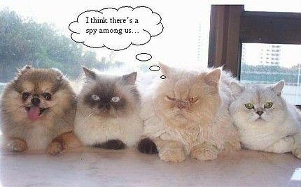 funny cats cats