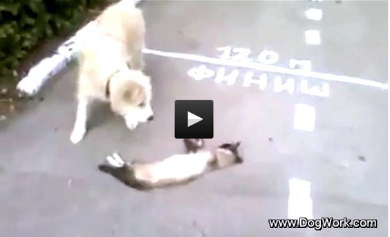 Dog Thinks Cat is Dead!
