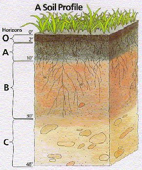 Pinterest the world s catalog of ideas for Soil horizons