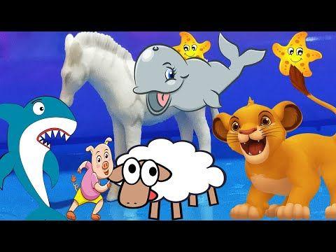 Learn Sea Animal And Zoo Animals Names Shark Video Toys For Kids Zoo Animals Names Sea Animals Animals For Kids