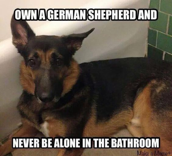 5 German Shepherds Who Need To Be Taken And Snuggled Immediately Shepherd Dog German Shepherd Dogs Dogs
