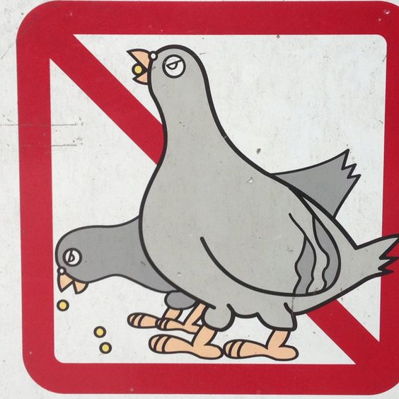 Hungry pigeons are strictly prohibited.