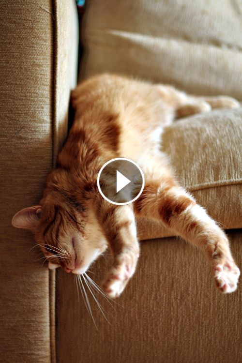 Video Cats Are Simply Funny Clumsy And Cute Funny Cat