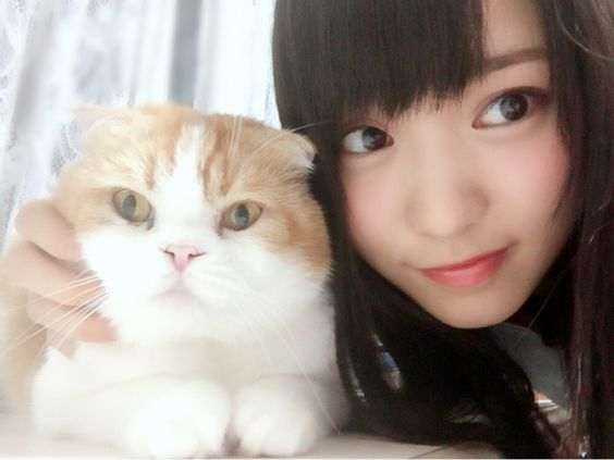 猫×菅井友香