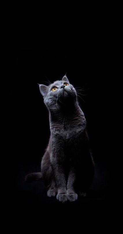42 New Ideas For Cats Wallpaper Iphone Grey Cats Iphone Duvar Kagitlari Kedi Karanlik Sanat