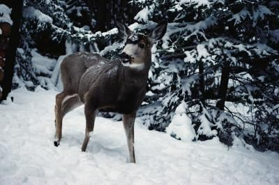 How to Make a Homemade Molasses Block for Deer: