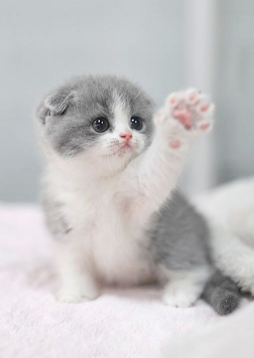 Ah Funny Baby Animals Videos Youtube Cute Baby Cats Cutest Kittens Ever Baby Animals Super Cute