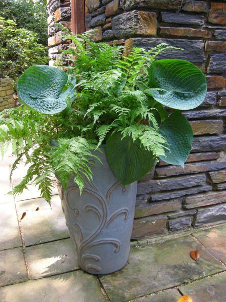 Shade - fern & hosta - elegant & simple. Modern container garden.