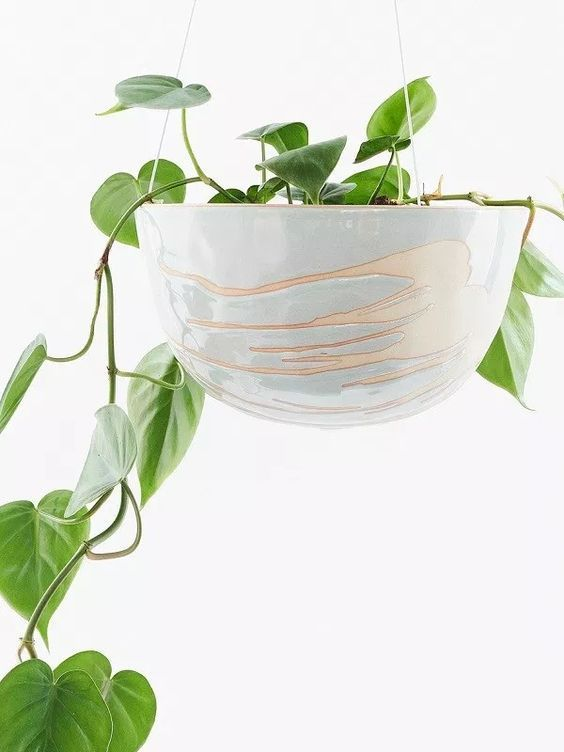 Hanging Planters Nz - G4rden Plant