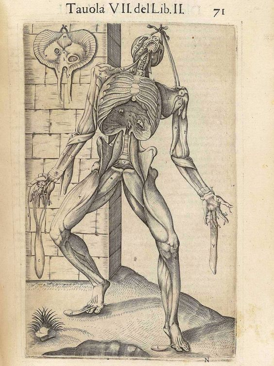 Valverde de Amusco, Juan (ca. 1525-ca. 1588)