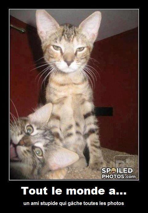 Tout le monde a un ami stupide qui gâche toutes les photos