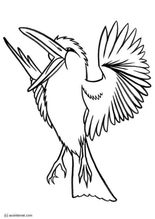Coloring Page Kookaburra Img 5607 Animal Coloring Pages Bird