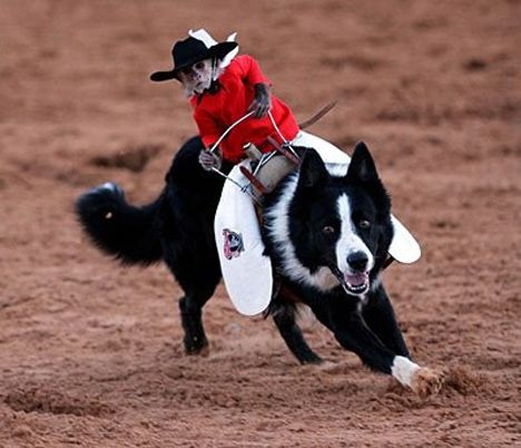 Baby Monkey Riding On A Dog Pinterest • The worl...