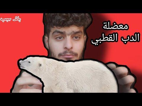 بلا سبب معضلة الدب القطبي Youtube Movies Poster Movie Posters