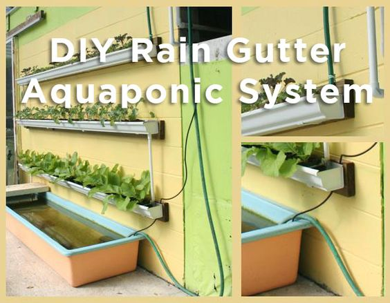 Gutter aquaponics using gutters and a fish tank to make for Fish aquaponics garden