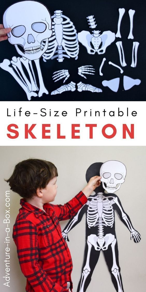 It is an image of Modest Life Size Printable Skeleton