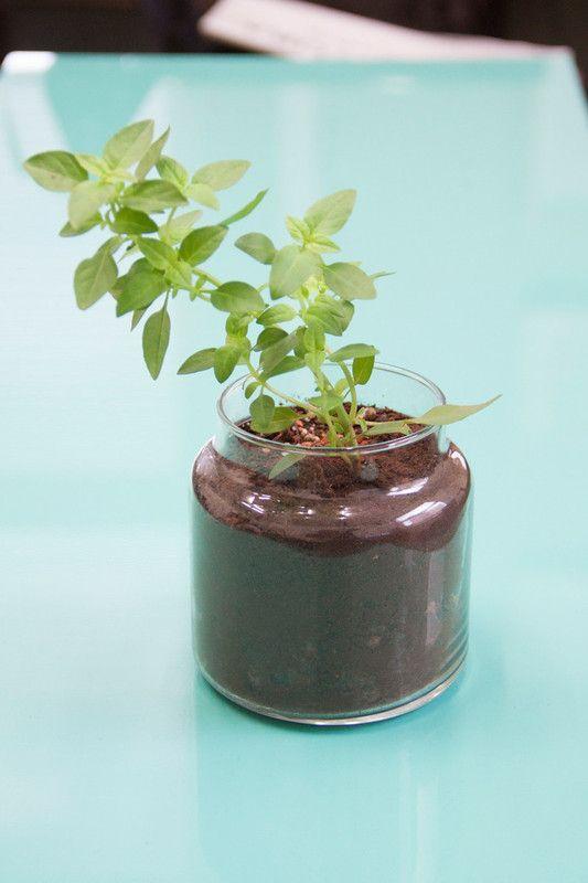 Tutorial: como cultivar sua própria horta em casa