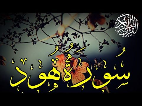 Pin On Quran قاري قرآن كريم محمد امين