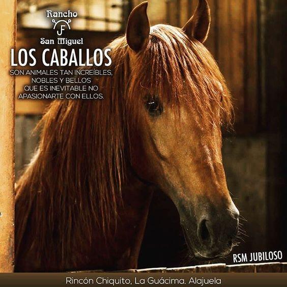 Rancho San Miguel. Criadores de Caballos Españoles, Escuela de Equitación, Shows Equestres. Alquiler de: Cuadras, volanta para bodas, locales para fiestas y otras actividades. Contáctenos al 2439-0003 ó 8336-6767