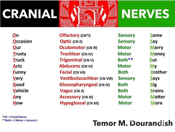Image result for cranial nerves mnemonic