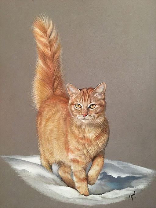 Chat Roux Dessin Chat Photo Chat Peinture Chat