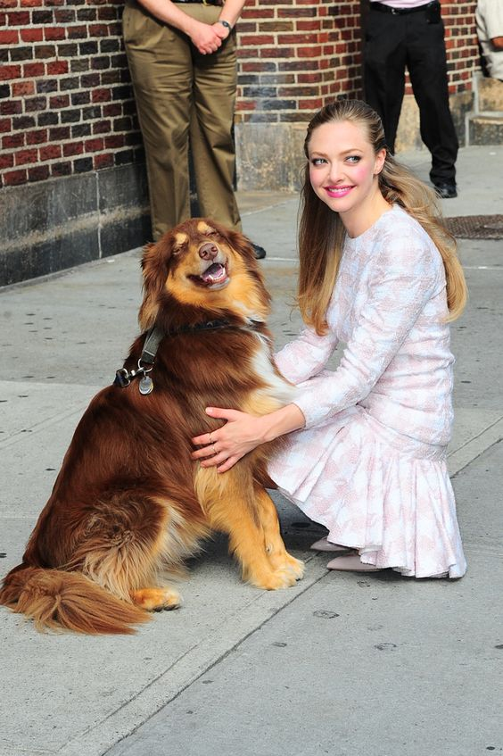 And even more amazingly he smiles. SMILES I TELL YOU. | Amanda Seyfried Has An Adorable And Talented Dog