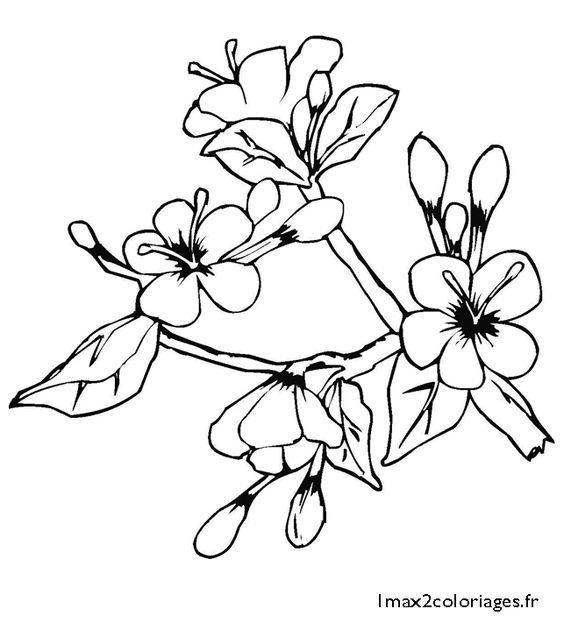 Des fleurs de mai