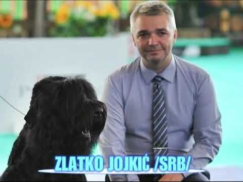 6th National Dog Show Cac Kac 3x Specialty Dog Shows 8 September