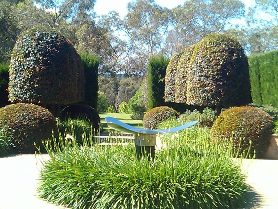 Topiary Gardening (Syzygium smithii), Mornington Peninsula, Australia