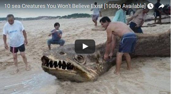 Top ten strangest sea creatures   BEAUTIFULSHARE
