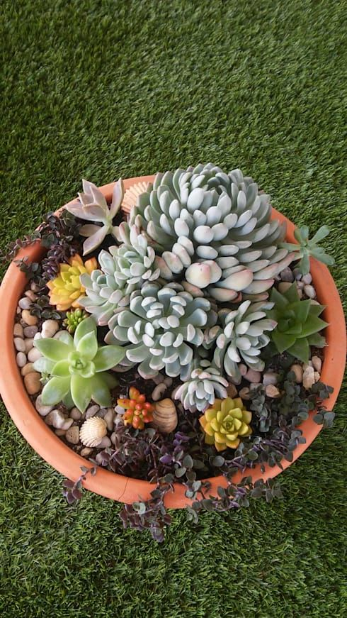 Suculentas Para Casa Y Jardin Como Plantarlas Y Cuidarlas Homify Homify Suculentas Jardin De Cactus Suculentas Jardin