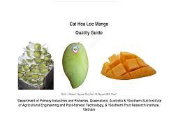 hoc loc mango - Google Search