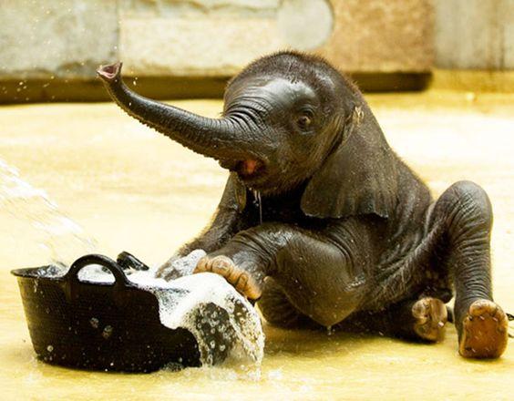 Animais Fofos no Banho- Ai, essa piscina é muito pequena! Como vou caber aí?