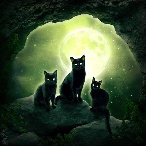 Chats dans le noir