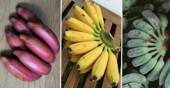 One Benefit Of Green Bananas Is The High Resistant Starch Content Banana Recipes Banana Health Benefits Banana Nutrients