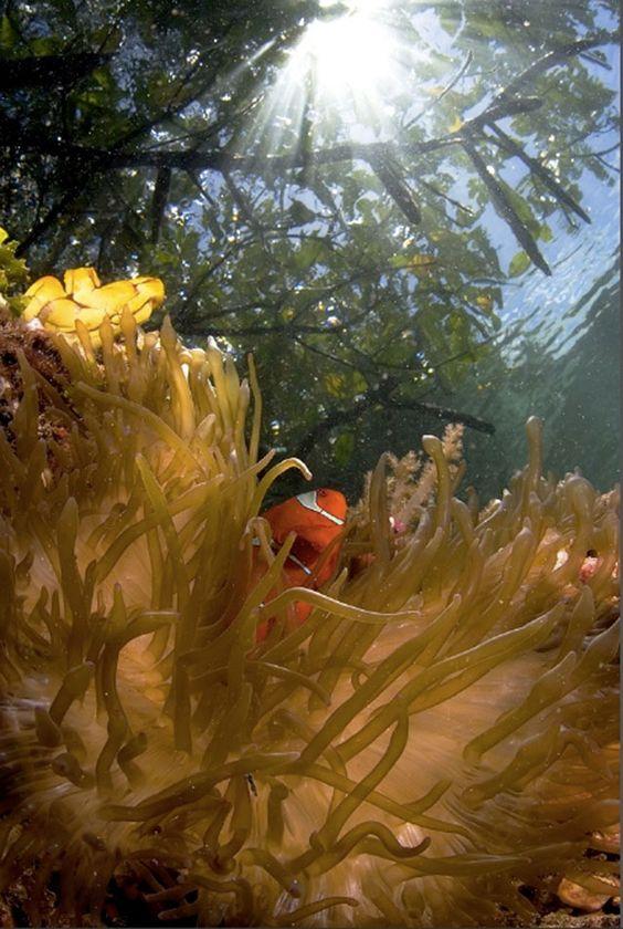 Mejores fotos marinas