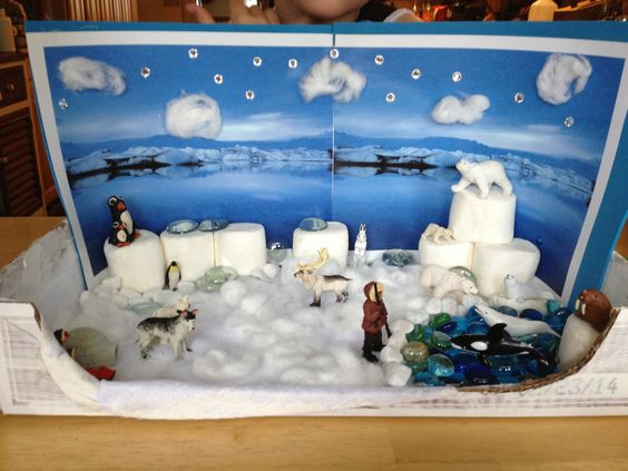 Arctic biome model:
