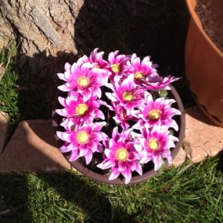 Make your garden look pretty, while your real flowers bloom for pennies