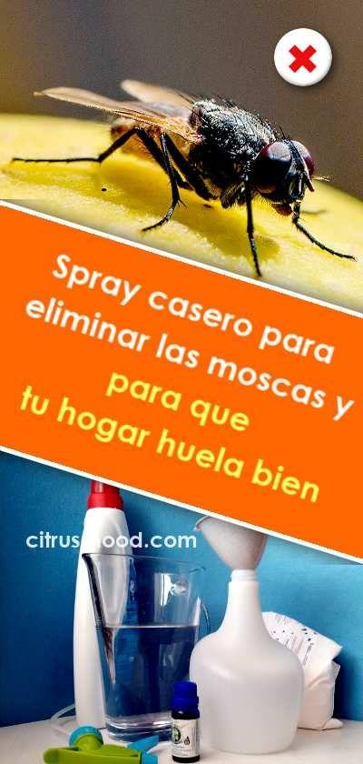Spray Casero Para Eliminar Las Moscas Y Para Que Tu Hogar Huela Bien Spray Casero Huelebien Malosolores Mosca R Cleaning Hacks Clean House Idea Creativas
