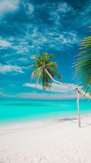 New Iphone Wallpaper Iphone Wallpaper トロピカルビーチ ビーチ 美しい風景