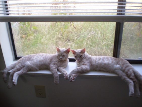 "The brothers ""Cat"" bookends!"