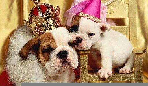 Família Real!