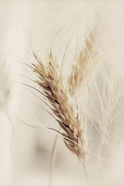Inspiration Mariage champêtre douceur - Epi de blé - jaune - @croquezlapomme #fairepart #mariage #croquezlapomme