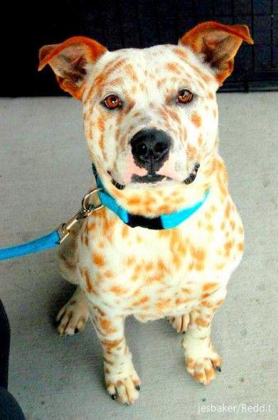 Mixed Breed Dog Shows Texas