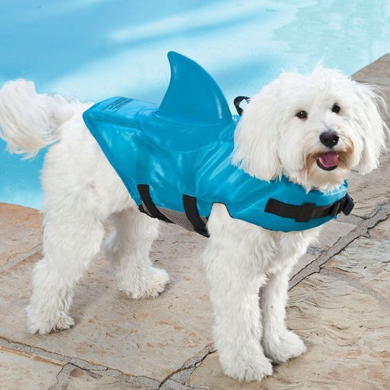 What To Consider When Buying A Life Jacket For Your Dog Abrigos