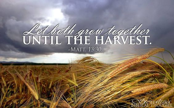 Image result for matthew 13:30