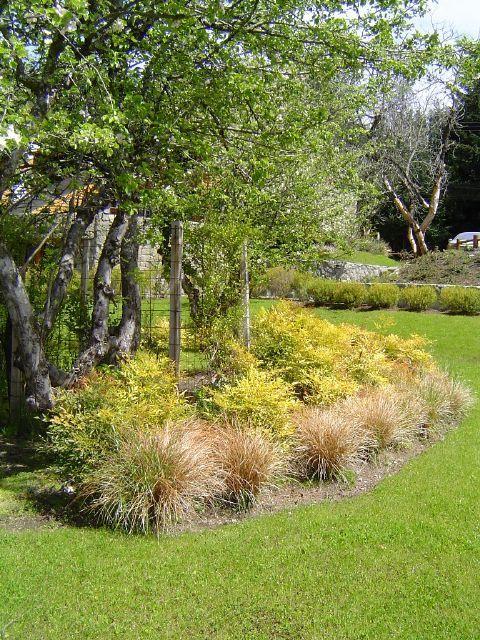 Cantero con Carex bronze con arbustos | Gramíneas Ornamentales ...