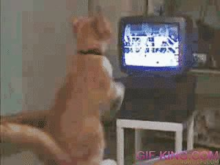 Cat watches boxing